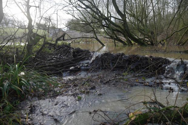 Forestry Journal: It can be a costly business to remove dams built by beavers.