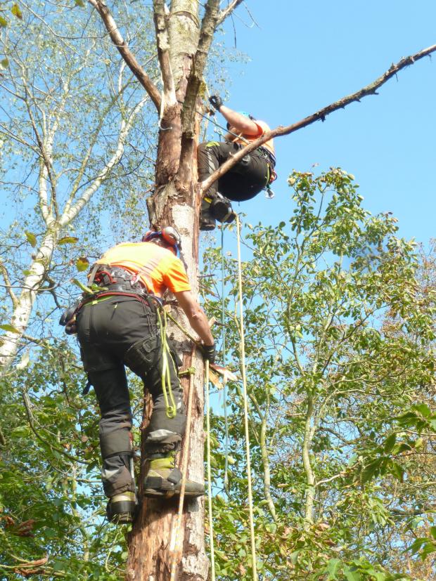 Forestry Journal: Poplar pole rescue carried out by Jim Shone (rescuer) and Lewis Johnson (casualty).