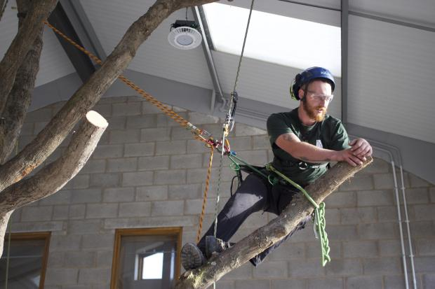Forestry Journal: A stationary rope system used with a moving rope system – hitch climber MRS and RW/chicane SRS.