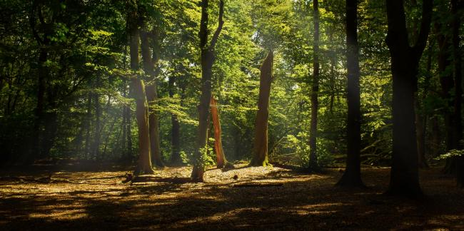 Proposals to plant 50,000 trees in York as part of new woodland area