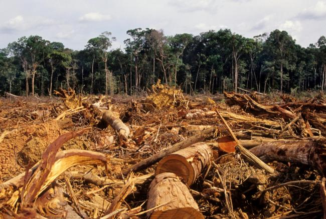 New law to curb illegal deforestation in supply chains