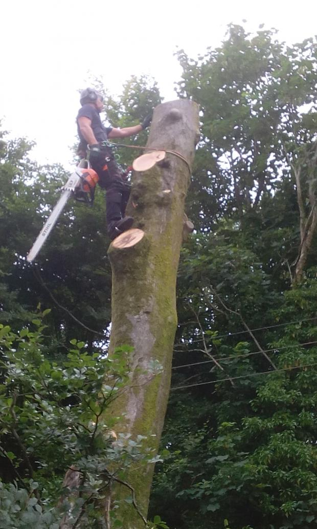 Forestry Journal: Matt Evans at work on a utility site.