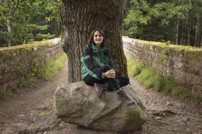 High hopes for second Highland 'Tree of the Year'