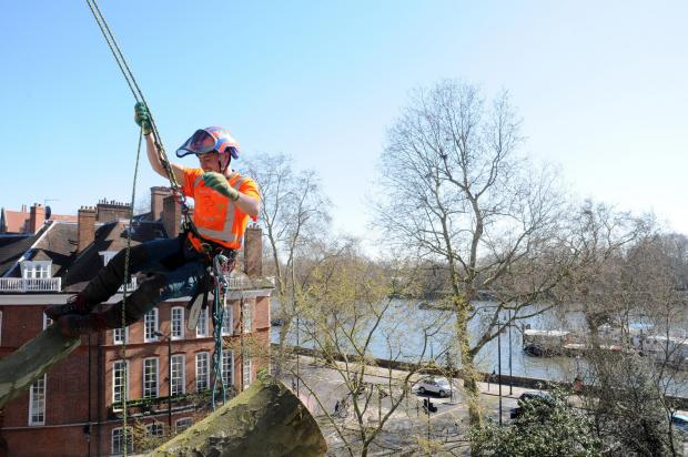 Forestry Journal: Arb manager James Jenkinson, also a lead climber on many jobs, demonstrating what being 20 metres above the worksite looks like.