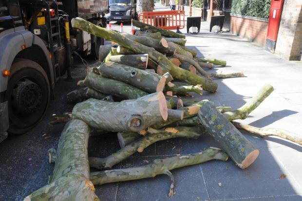 Forestry Journal: Growing log pile. All will be driven to their 3.5-acre yard in Ruislip and used for biomass.