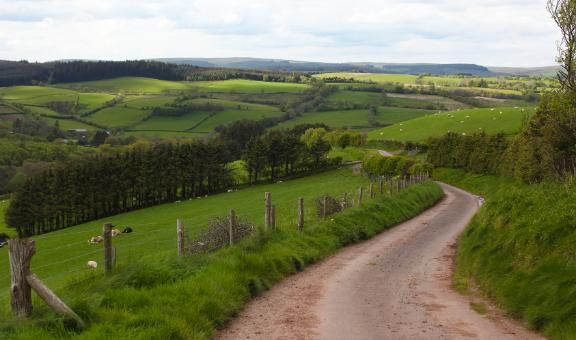 Tilhill to host farming and forestry webinar