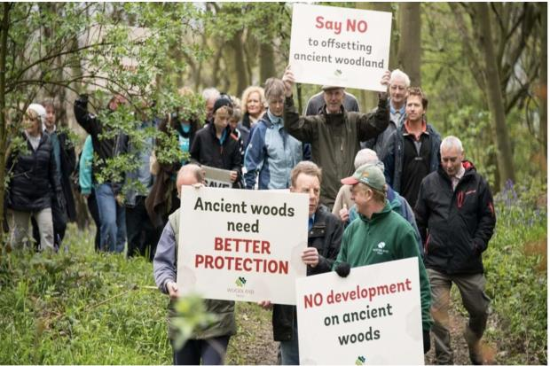 Bypass a 'win' for ancient woodland