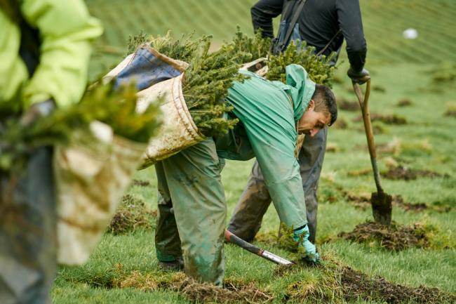 FLS to plant 'the equivalent of 5 trees for every person in Scotland'