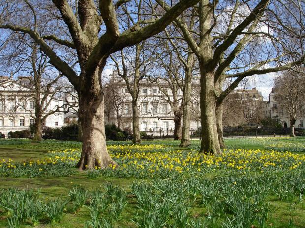 Forestry Journal: London-based arborists can hardly escape becoming 'registered authorised professional operators' because more than half the capital's trees are London plane. Royal Parks like Green Park seen here in early spring are no exception. And with Massaria disease increasingly prevalent London plane trees require close scrutiny and extra care.