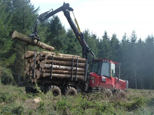 Forestry Journal: Norway spruce harvested on a Suffolk estate and destined for a well-known sawmill in Southampton. Transportation of such timber now requires a plant passport.
