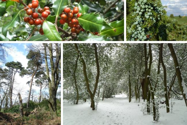 Winter's green history of hope and expectation